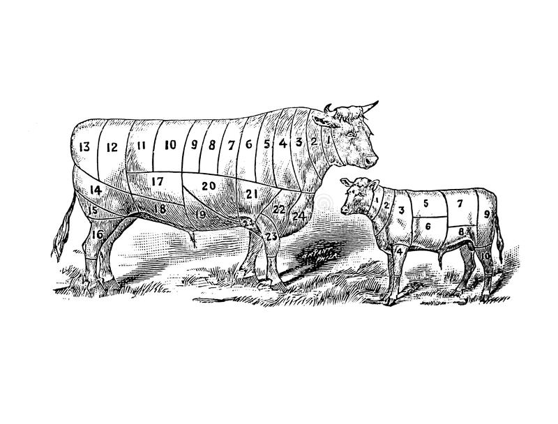Illustration of a animal. stock photography