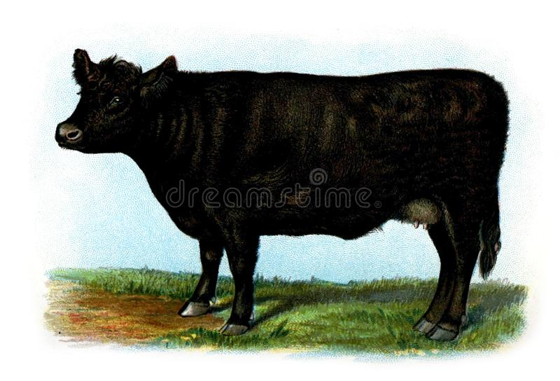Illustration of a animal. stock photos