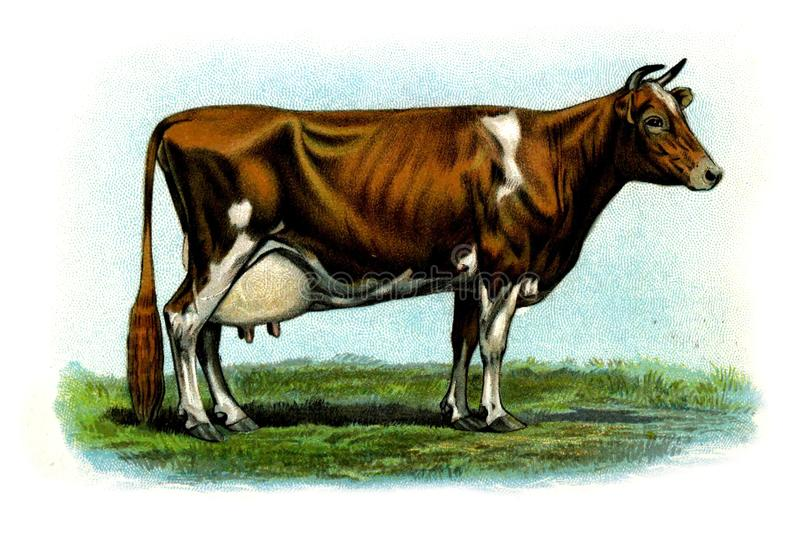 Illustration of a animal. stock image