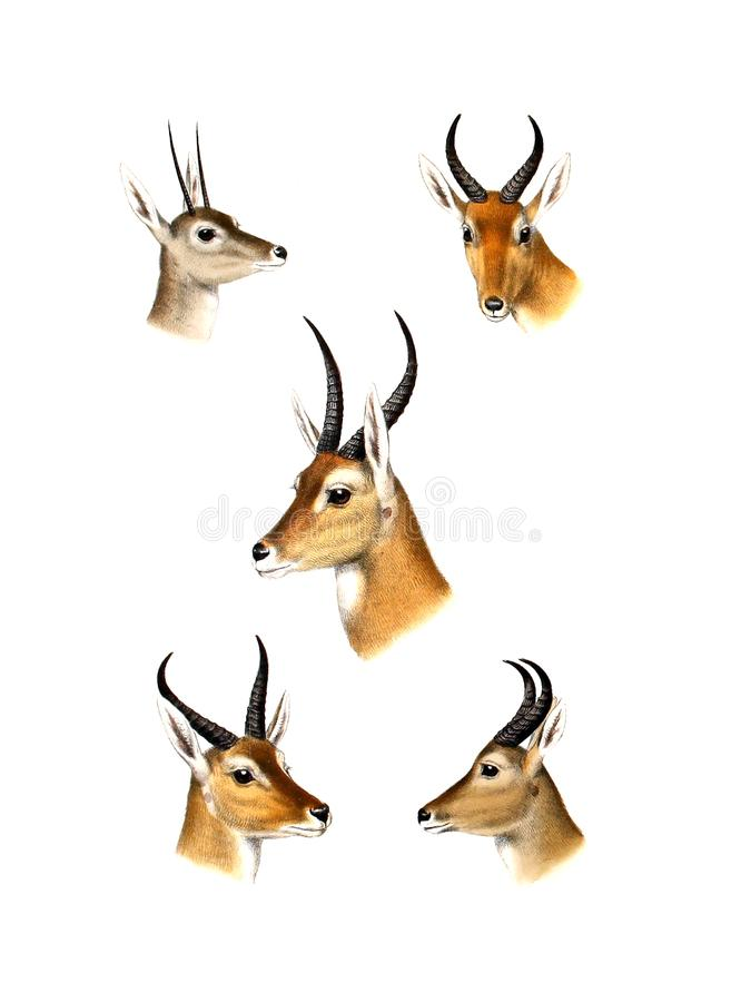 Illustration of a animal. stock illustration