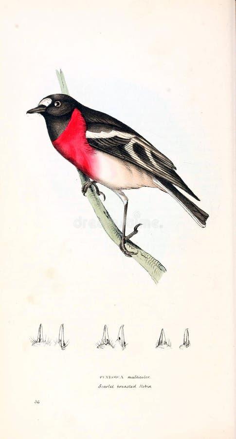 Illustration of animal. vector illustration
