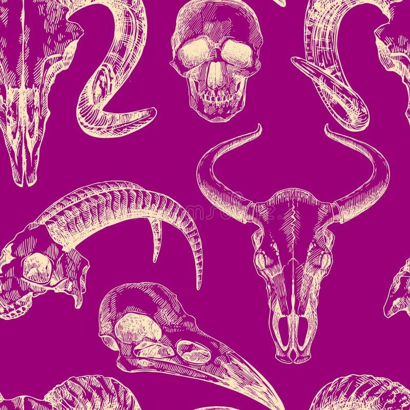 Illustration animal skull stock vector. Illustration of anatomy ...