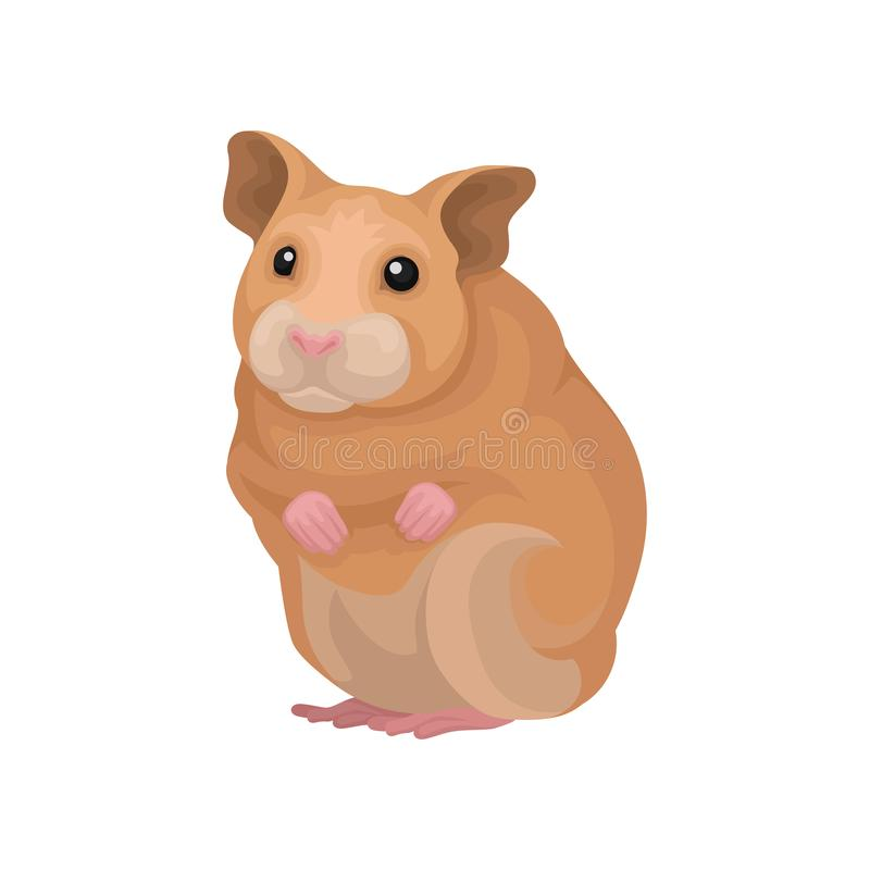 Illustration animale de vecteur rongeur mignon de hamster de petit sur un fond blanc illustration libre de droits