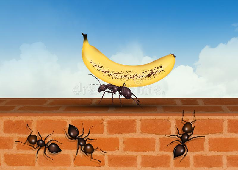 Fruit Ants Stock Illustrations 84 Fruit Ants Stock Illustrations Vectors Clipart Dreamstime