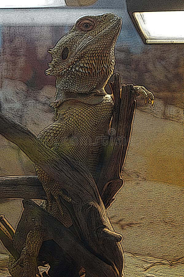 Illustration Australian dragon lizard. Illustration engraving: Australian dragon lizard in terrarium vector illustration
