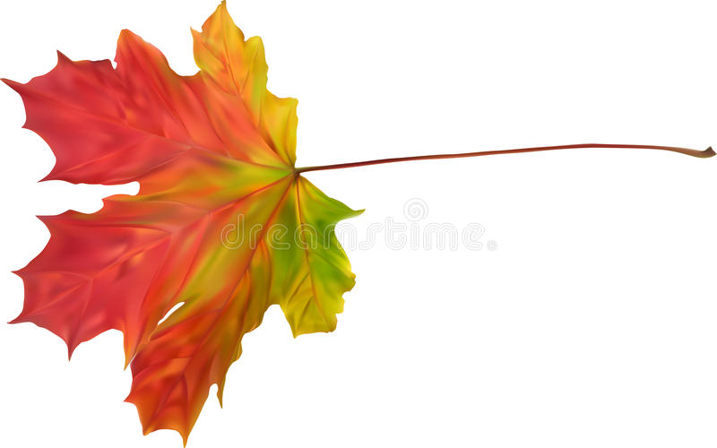 Download Illustration With Autumn Bright Maple Leaf Stock Vector - Image: 39188463