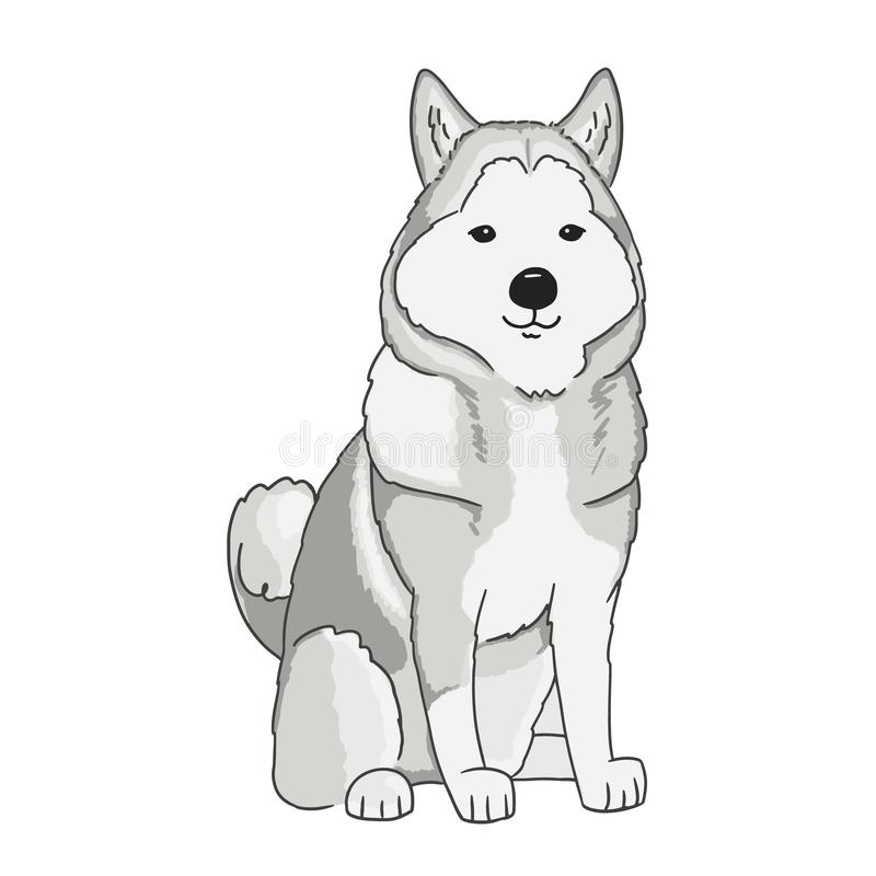 Illustration av att sitta siberian skrovligt Vektorkonst av djuret på vit bakgrund Skrovligt utdraget för gullig tecknad film vid vektor illustrationer