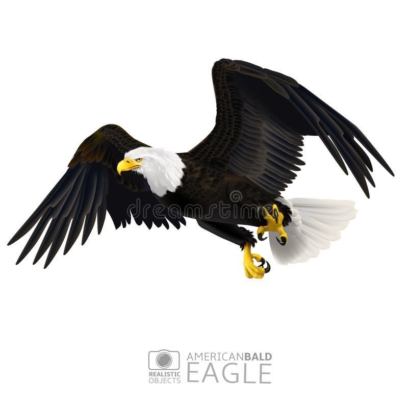 Illustration av den amerikanska skalliga örnen som isoleras royaltyfri illustrationer
