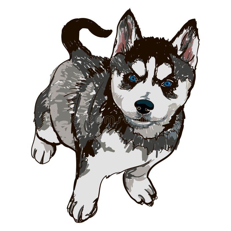 Illustration av den skrovliga hundavelaveln royaltyfri illustrationer