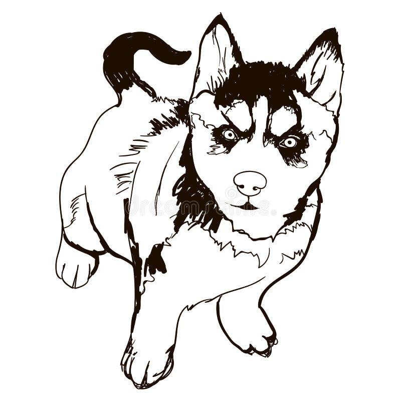 Illustration av den skrovliga hundavelaveln vektor illustrationer