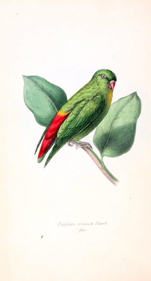 Illustration av djuret vektor illustrationer