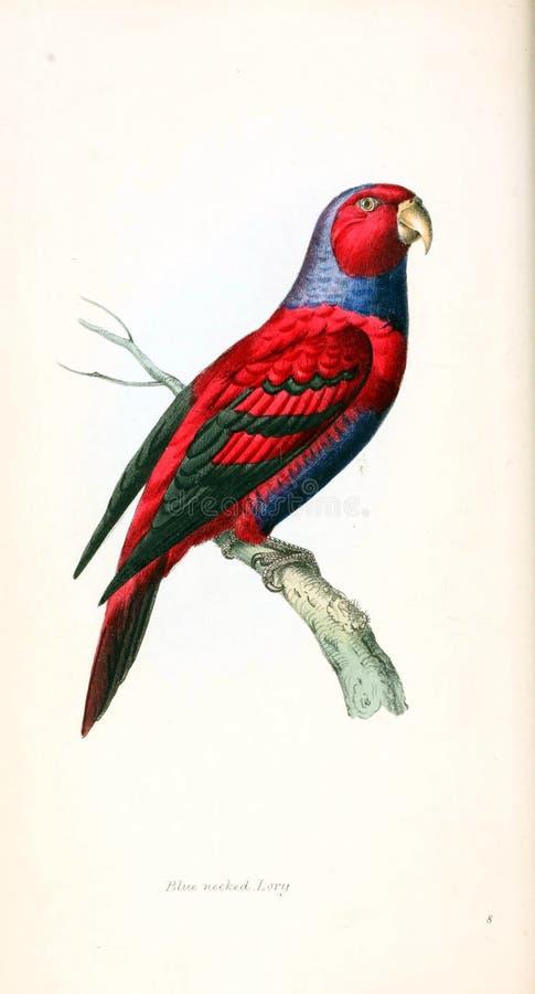 Illustration av djuret royaltyfri illustrationer