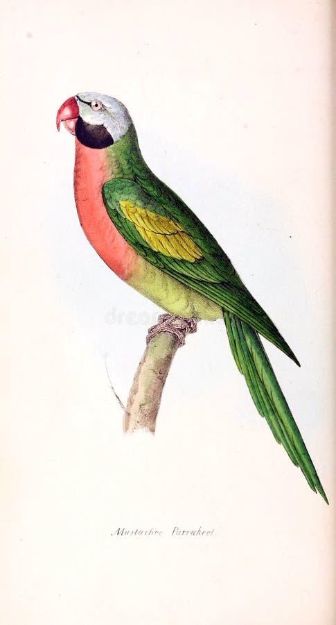 Illustration av djuret stock illustrationer