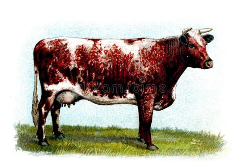 Illustration av ett djur royaltyfri bild