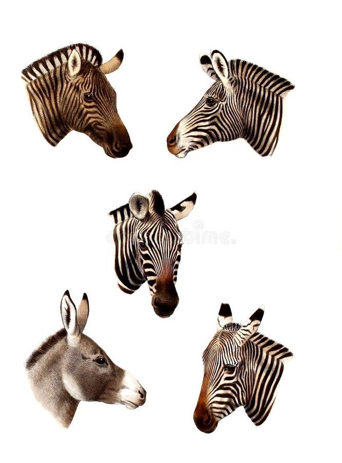 Illustration av ett djur royaltyfria bilder
