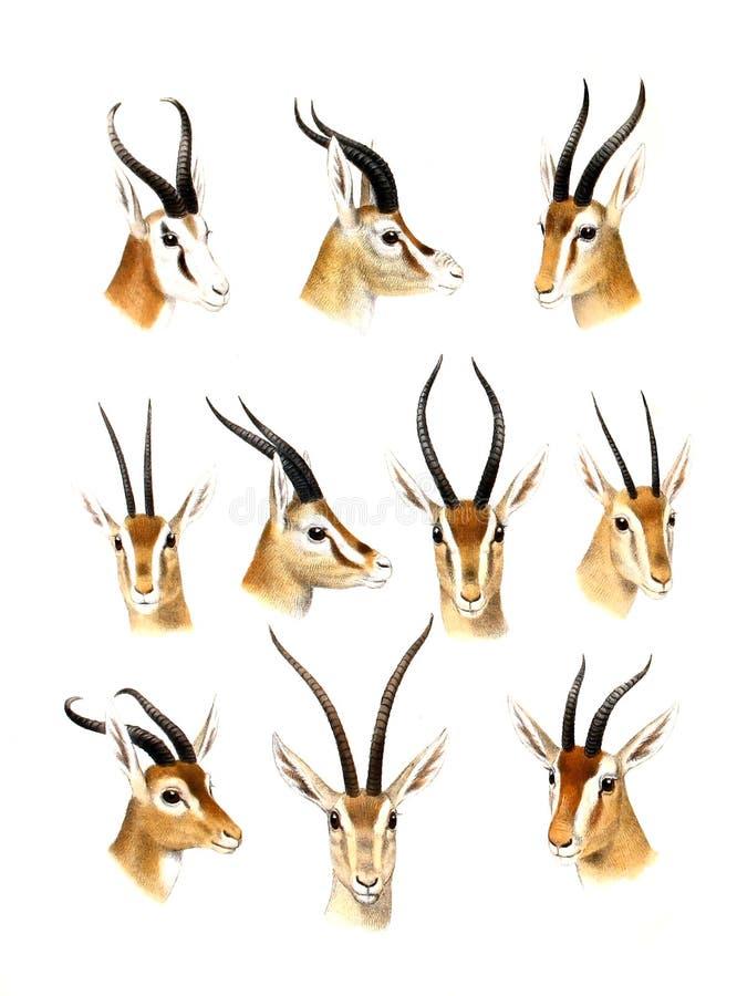 Illustration av ett djur royaltyfri illustrationer