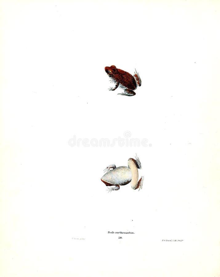 Illustration av ett djur arkivbilder