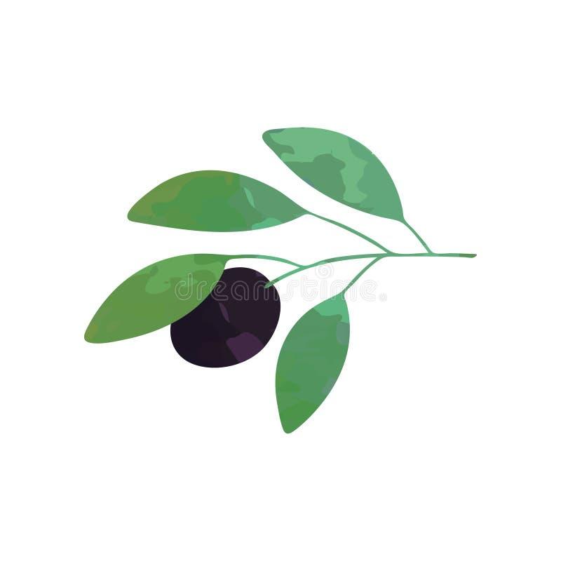 Illustration av filialen med sidor för svart oliv och gräsplan Tecken av fred Organisk mat Design för garnering, logo eller vektor illustrationer
