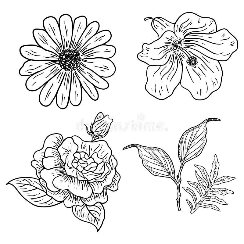 Illustration av fyra klassiska blommor royaltyfri illustrationer