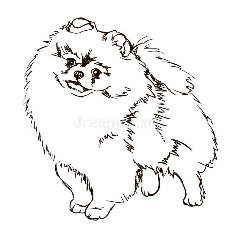 Illustration av hundaveln Pomeranian royaltyfri illustrationer