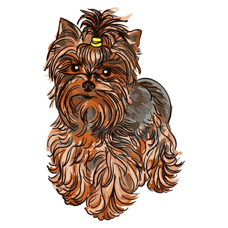 Illustration av hundaveln Yorkshire Terrier vektor illustrationer