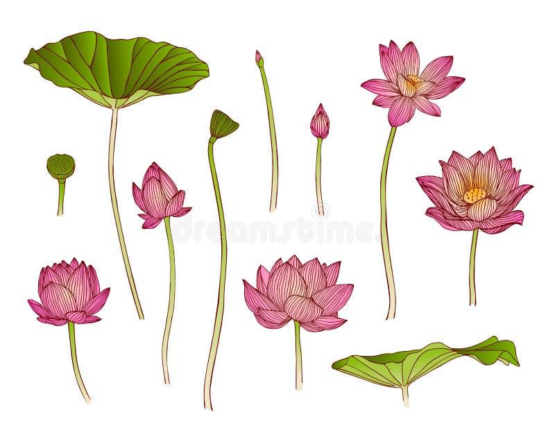 Illustration av lotusblommablomman royaltyfri illustrationer