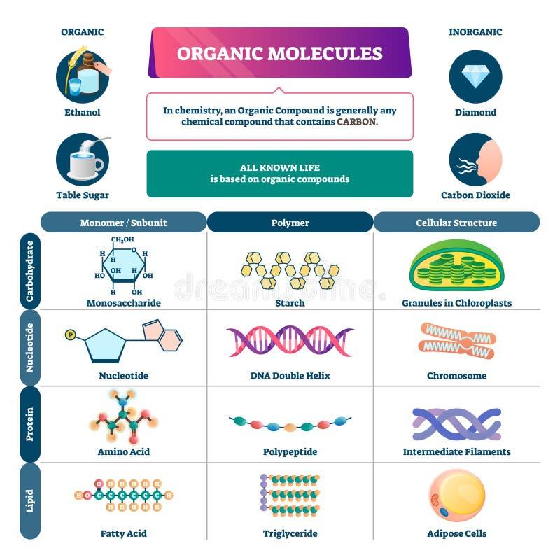 Illustration av vektorn för organiska molekyler Kemiskt utbildningsprogram stock illustrationer