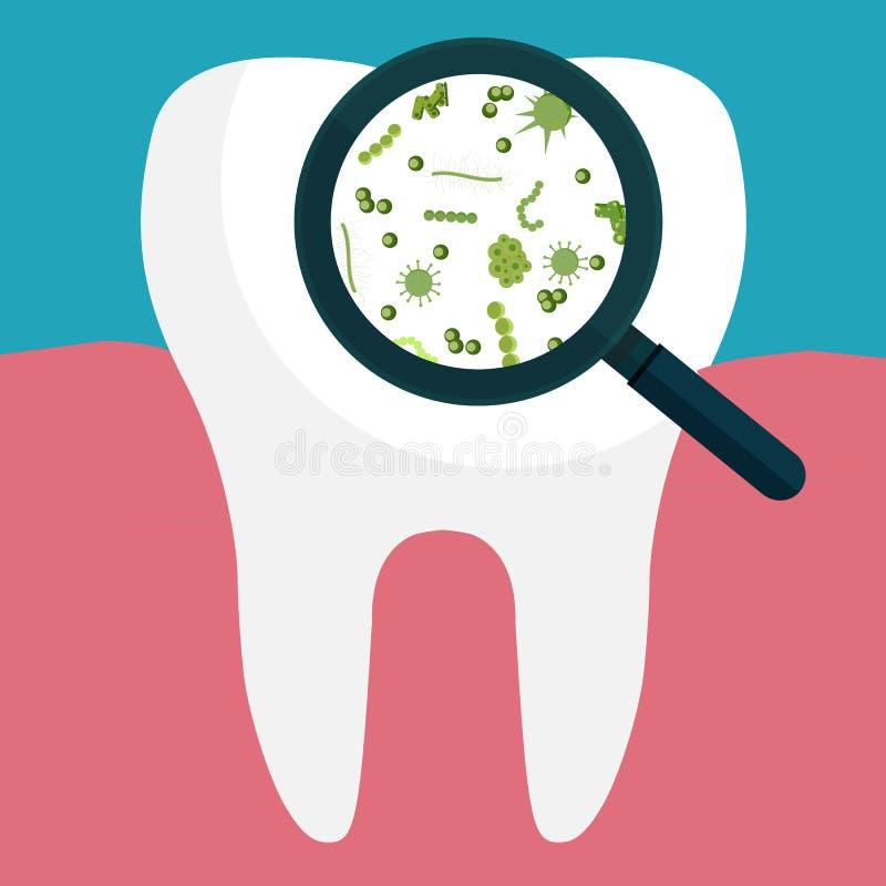 Illustration Bactéries sur une dent blanche humaine étant regardée sur un gla de agrandissement illustration stock