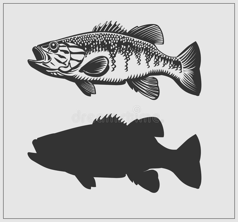 Bass fish illustration. stock illustration