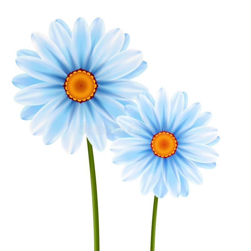Illustration camomile flowers vector illustration stock illustration