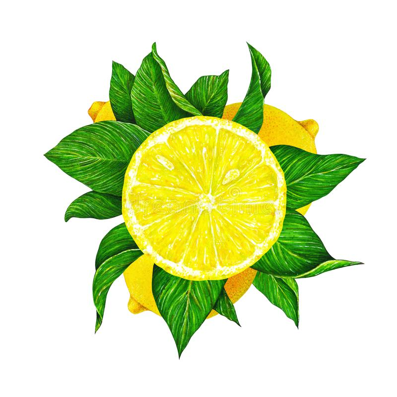 Illustration of beautiful yellow lemon fruit with green leaves isolated on white background. Watercolor drawing by hand. stock photo