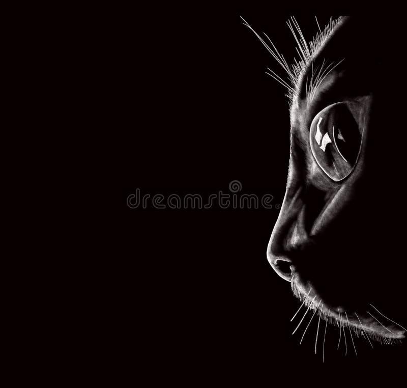 illustration black cat face portrait black background close up desktop wallpaper illustration black cat face 159800476