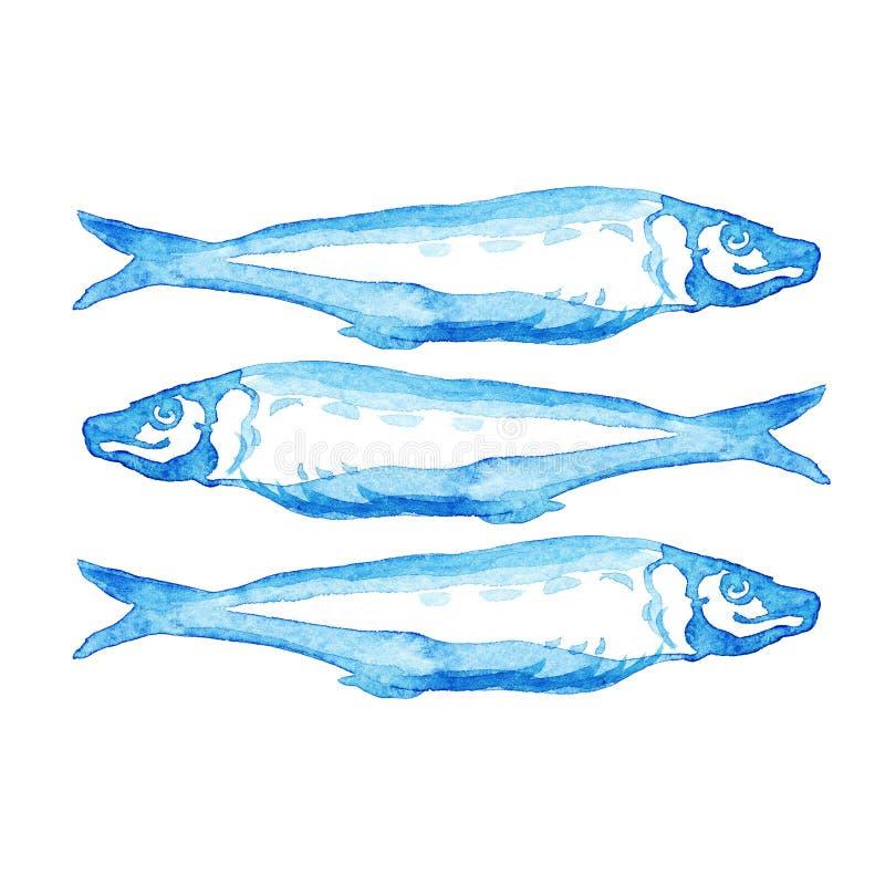 Illustration bleue tirée par la main d'aquarelle par groupe de poissons atlantiques de maquereau sur le fond blanc illustration libre de droits