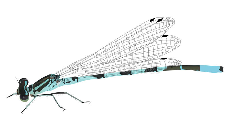 Illustration With Blue Dragonfly Royalty Free Stock Images