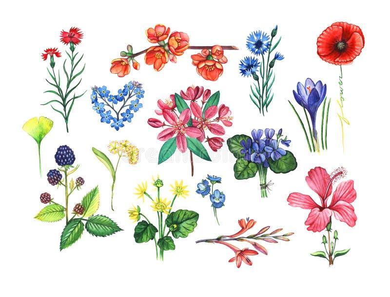 Illustration botanique image stock