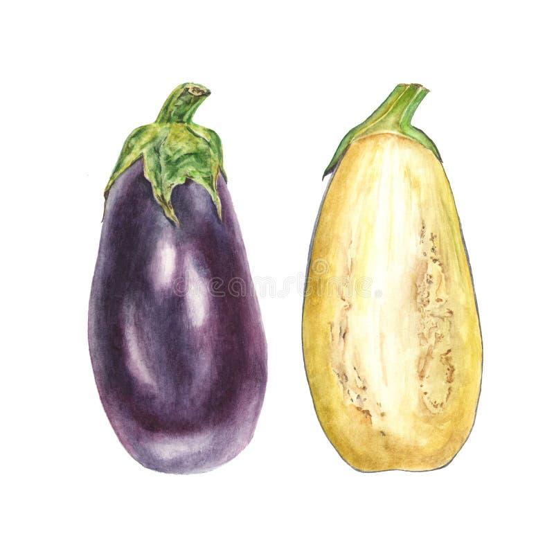 Illustration botanique d'aquarelle de l'aubergine bleue d'aubergine entière et de la coupe sur le fond blanc illustration de vecteur