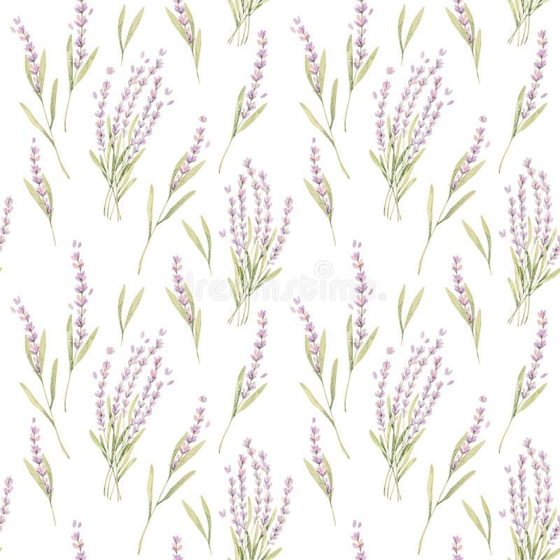 Illustration botanique d'aquarelle Modèle sans couture de botanique avec les fleurs violettes de lavande Fleur florale Perfection illustration libre de droits