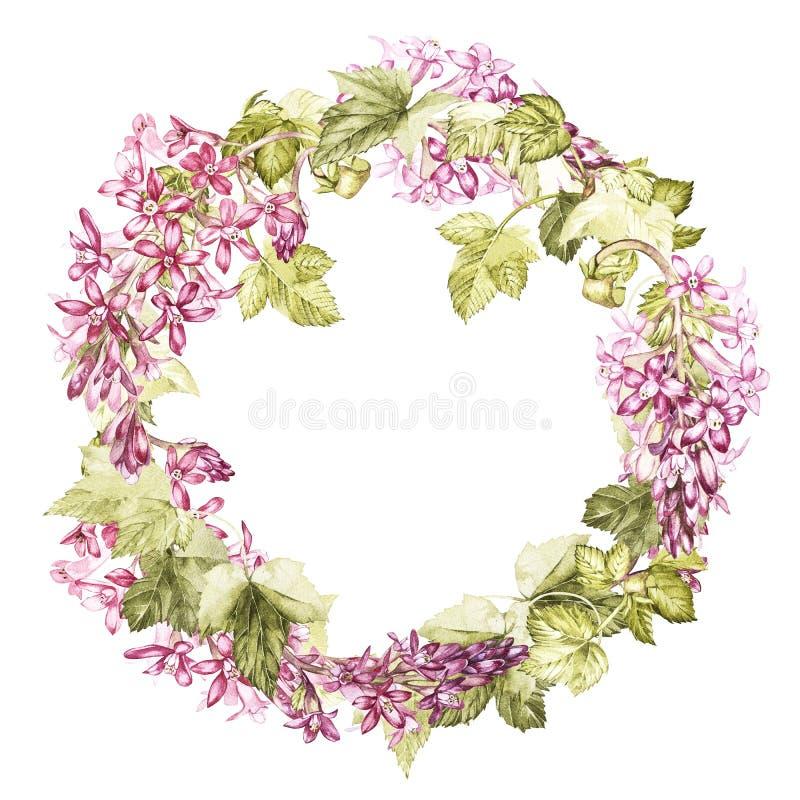 Illustration botanique d'aquarelle tirée par la main des fleurs du cassis Élément pour la conception des invitations, film illustration stock