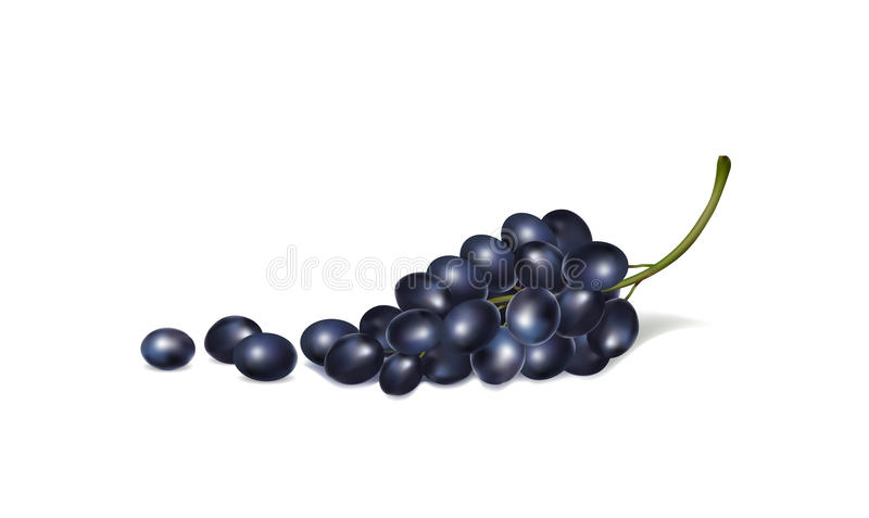Download Illustration Of Bunches Of Grapes On A White Background Stock Vector - Image: 83711100
