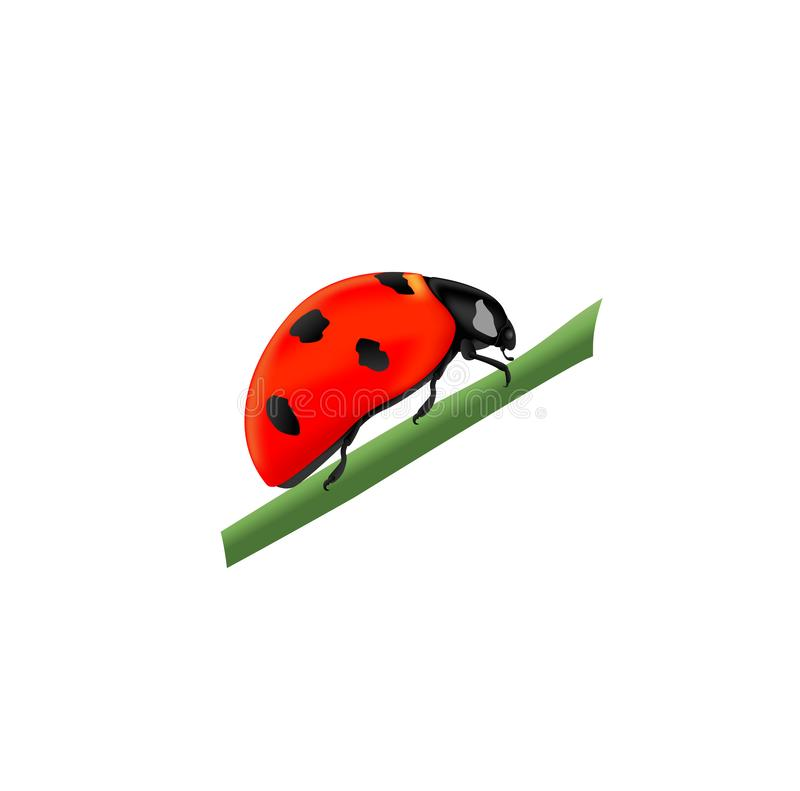Red ladybug sitting on a green branch, side view stock illustration