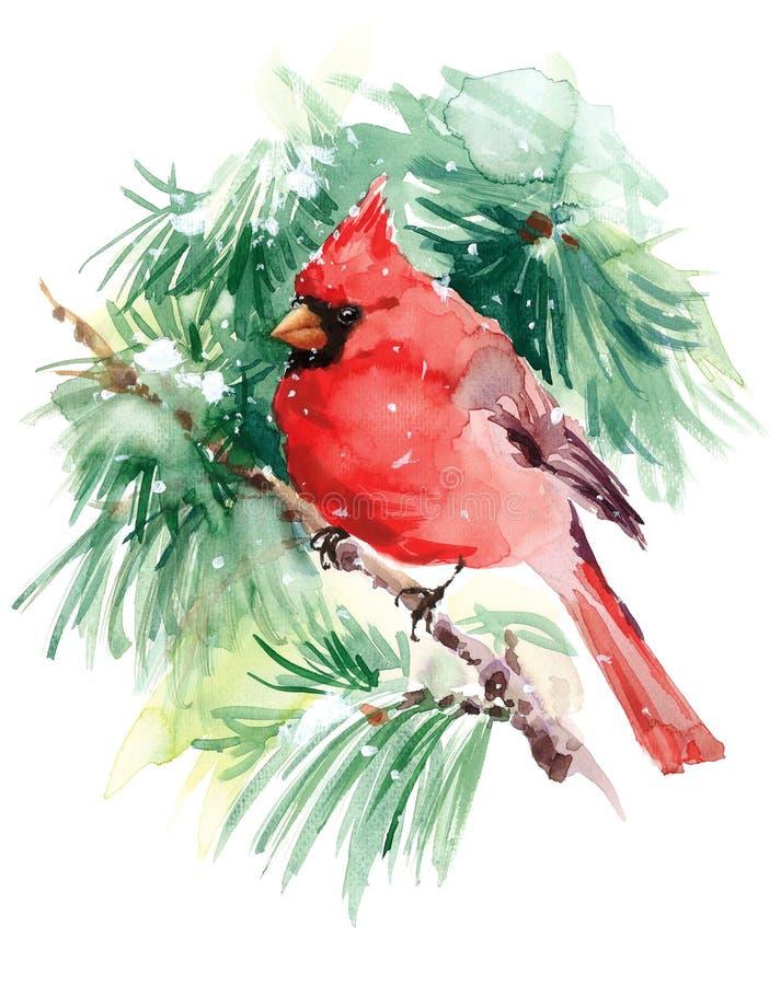 Illustration cardinale de Bird Watercolor Winter tirée par la main illustration de vecteur