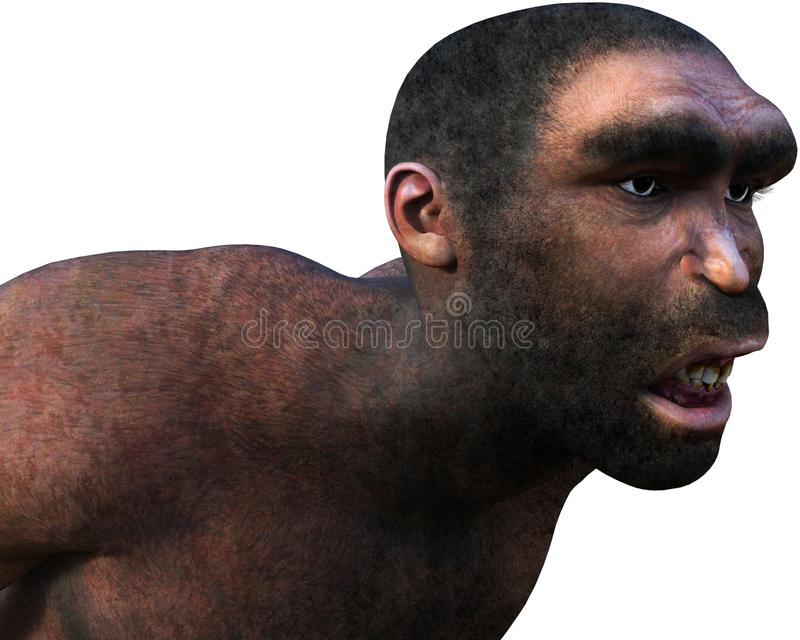 Caveman, Neanderthal, Ancient Man, Isolated. Illustration of a caveman or neanderthal man. The ancient ancestor human is isolated on white. PNG file available royalty free illustration