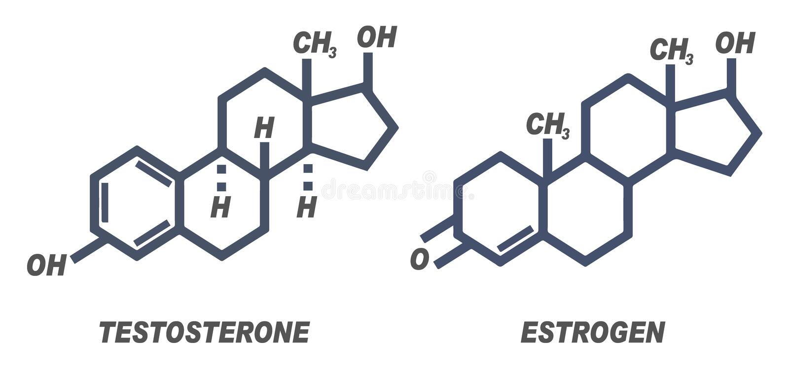 Illustration of chemical formula for male and female hormones Testosterone and Estrogen stock illustration