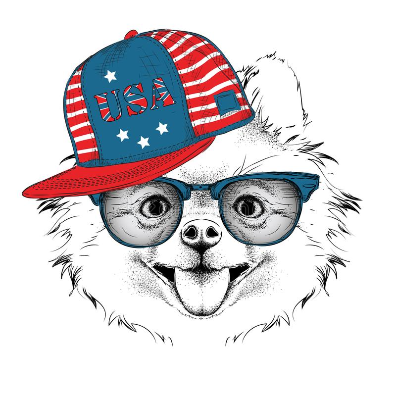Illustration of chihuahua in the glasses, headphones and in hip-hop hat with print of USA. Vector illustration. Illustration of chihuahua in the glasses royalty free illustration