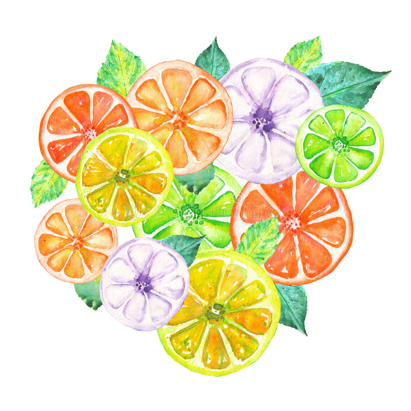 Illustration with colored watercolor candied fruits. Illustration with colored candied fruits painted in watercolor on a white background vector illustration