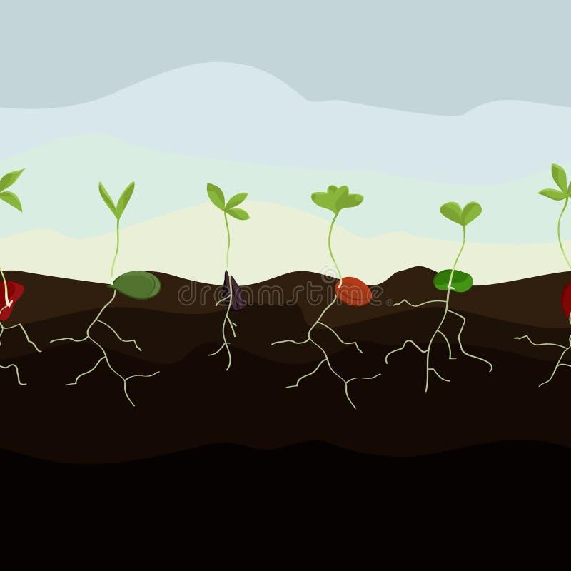 Illustration croissante de graines illustration libre de droits