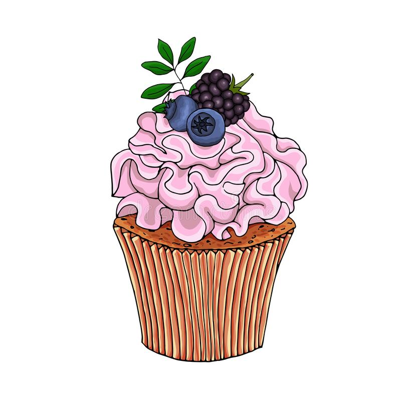 Illustration of a cupcake decorate with pink cream and blueberries, blackberry, isolated on a white background. EPS 10 vector royalty free illustration