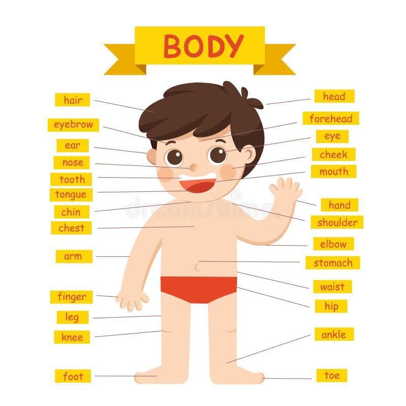 Parts Of Body. Cute Cartoon Boy Royalty Free Cliparts, Vectors, And Stock  Illustration. Image 122251510.