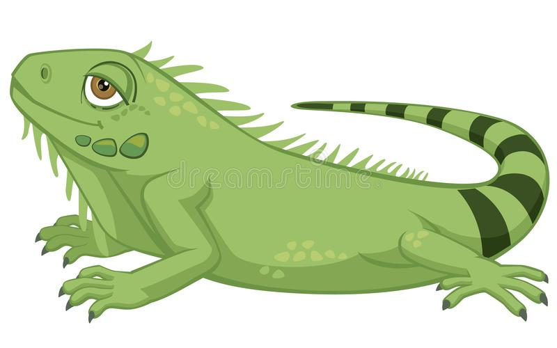Illustration détaillée mignonne de vecteur de style de bande dessinée d'iguane d'animal familier d'isolement sur le blanc photo libre de droits