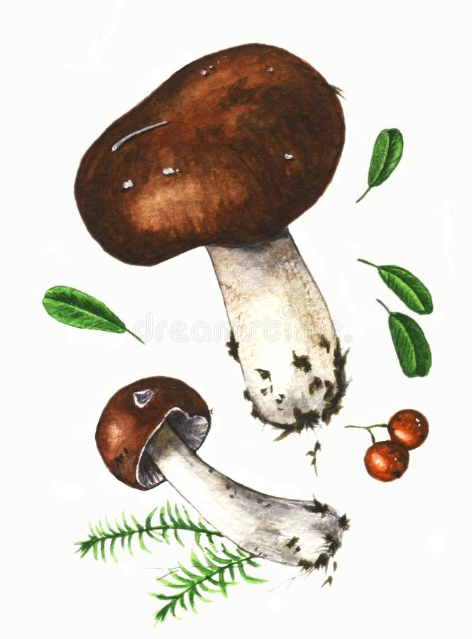 Illustration d'aquarelle avec des champignons et des baies illustration stock